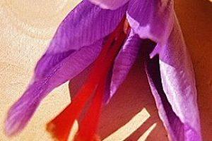 big_fleur_20site