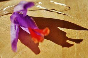 big_fleur_20site_204